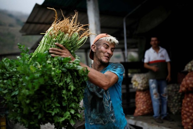 "A worker loads bunches of herbs into a truck that transports vegetables to sell in Maturin, in La Grita, Venezuela January 27, 2018. REUTERS/Carlos Garcia Rawlins SEARCH ""LAWLESS ROADS"" FOR THIS STORY. SEARCH ""WIDER IMAGE"" FOR ALL STORIES.?"