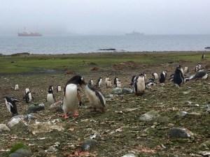 Hallan millones de pingüinos adelaida en el océano Antártico (Fotos)