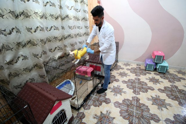 A veterinary medicine student puts clothes on a cat in a cat hotel in Basra, Iraq, March 13, 2018. Picture taken March 13, 2018. REUTERS/Essam Al-Sudani