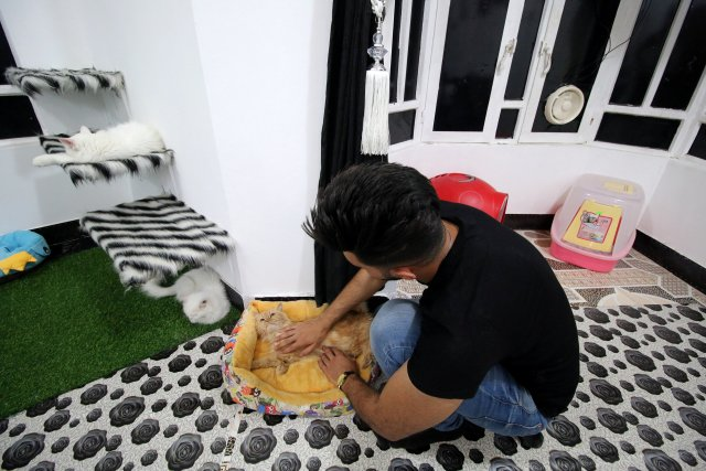 A veterinary medicine student plays with a cat in a cat hotel in Basra, Iraq, March 13, 2018. Picture taken March 13, 2018. REUTERS/Essam Al-Sudani