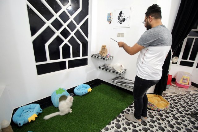 A veterinary medicine student plays with cats in a cat hotel in Basra, Iraq, March 13, 2018. Picture taken March 13, 2018. REUTERS/Essam Al-Sudani
