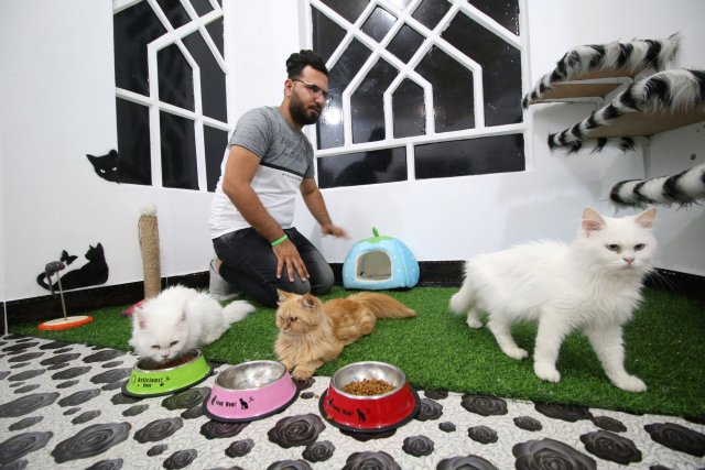 A veterinary medicine student feeds cats in a cat hotel in Basra, Iraq, March 13, 2018. Picture taken March 13, 2018. REUTERS/Essam Al-Sudani