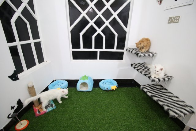 Cats are seen at a room in a cat hotel in Basra, Iraq, March 13, 2018. Picture taken March 13, 2018. REUTERS/Essam Al-Sudani
