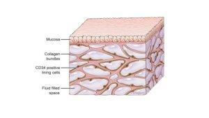 El intersticio, el nuevo órgano del cuerpo humano