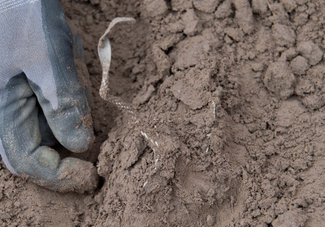 """Hobby archaeologist Rene Schoen digs out a silver necklace in Schaprode, northern Germany on April 13, 2018. A 13-year-old boy and a hobby archaeologist have unearthed a """"significant"""" trove in Germany which may have belonged to the legendary Danish king Harald Bluetooth who brought Christianity to Denmark. A dig covering 400 square metres (4,300 square feet) that finally started over the weekend by the regional archaeology service has since uncovered a trove believed linked to the Danish king who reigned from around 958 to 986. Braided necklaces, pearls, brooches, a Thor's hammer, rings and up to 600 chipped coins were found, including more than 100 that date back to Bluetooth's era. / AFP PHOTO / dpa / Stefan Sauer / Germany OUT"""
