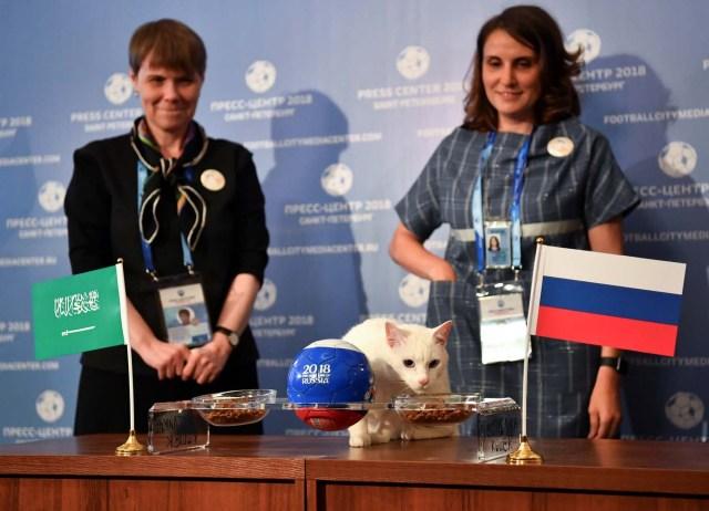 El gato Aquiles, uno de los cazadores de ratones del Museo Estatal del Hermitage, intenta predecir el resultado del partido de apertura de la Copa Mundial de la FIFA 2018 entre Rusia y Arabia Saudita durante un evento en San Petersburgo, Rusia el 13 de junio de 2018. REUTERS / Dylan Martinez