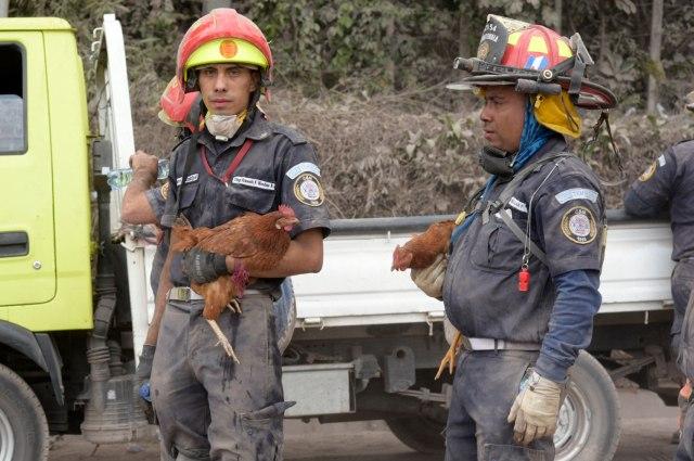 GU2013. EL RODEO (GUATEMALA), 05/06/2018.- Rescatistas continúan las labores de búsqueda hoy, martes 5 de junio de 2018, en la localidad de El Rodeo (Guatemala), después de la erupción del volcán de Fuego. A 70 aumentó la cifra provisional de muertos en Guatemala por la erupción del volcán de Fuego, y las brigadas reanudaron hoy la búsqueda de desaparecidos, cuyo número es incierto, bajo las toneladas de ceniza, informó una fuente oficial. EFE/Rodrigo Pardo