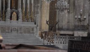 Capturan a un venado vagando por una iglesia en Francia (video)