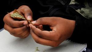 Francia da un primer paso hacia la autorización de la marihuana medicinal
