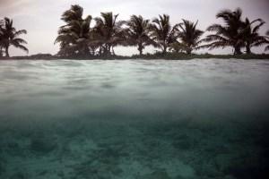 Los arrecifes de Belice, un tesoro de biodiversidad revive en el Caribe (Fotos)