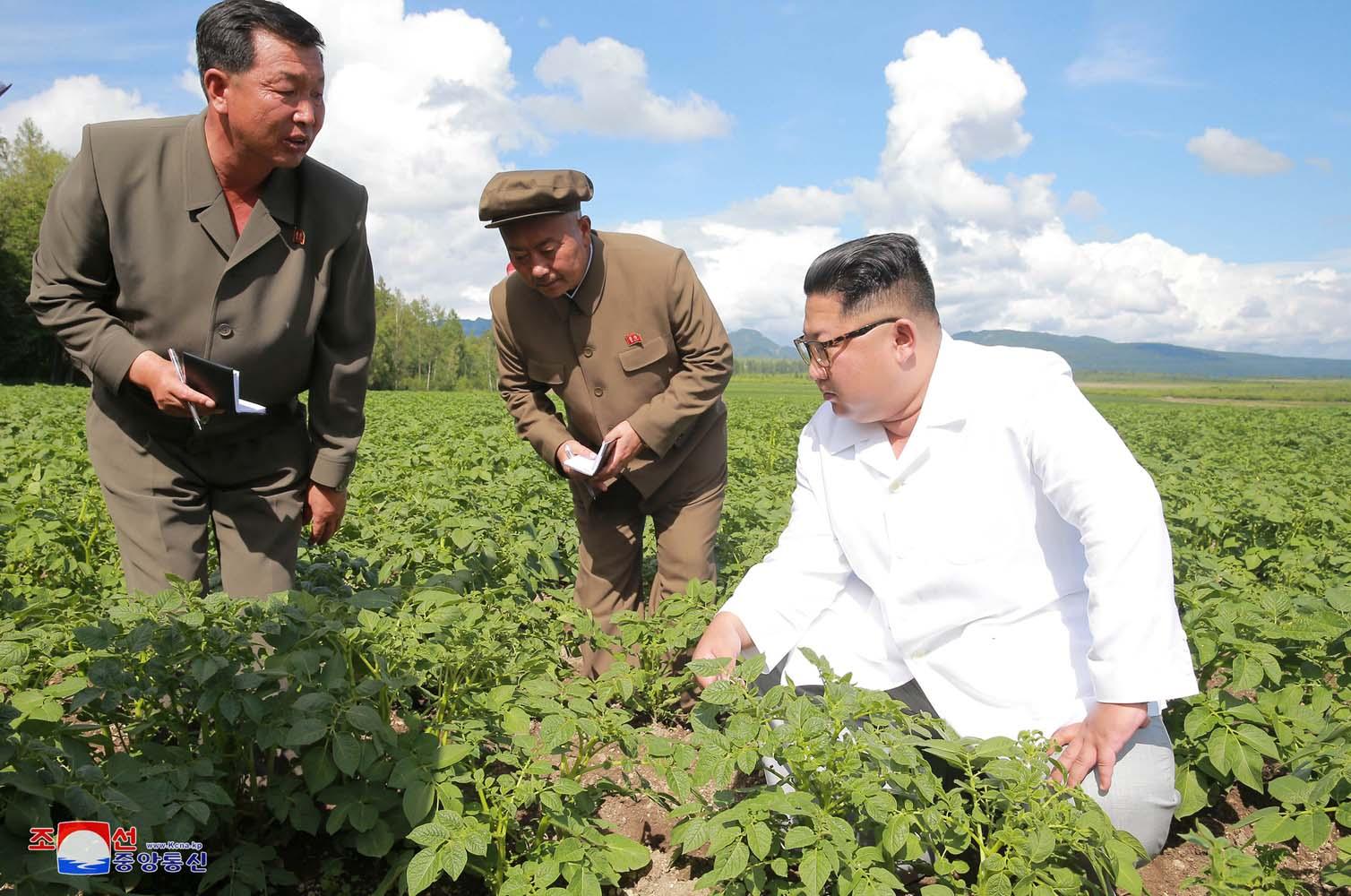 Kim Jong Un prefirió visitar campo de papas que reunirse con Pompeo