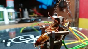 ¿Todo bien? Este artista hizo una silla eléctrica para cucarachas (Video y Fotos)