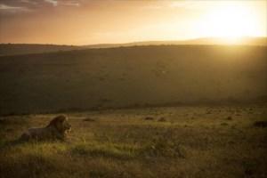 Tres cazadores son devorados por una manada de leones en Sudáfrica