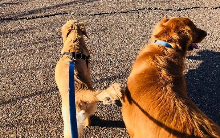 Perro es mordido por una serpiente al proteger a su dueña