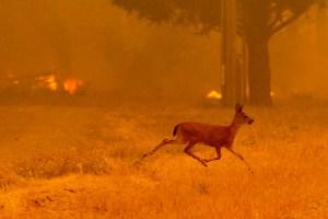 Llegan a siete los muertos por incendio en California