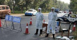 China confirma primer brote de peste porcina africana en su historia