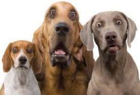 Alimentos para humanos que tus perros NUNCA deberían comer