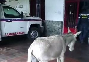 Detienen a bombero venezolano por comparar a Maduro con un burro, denuncia Foro Penal (Video)