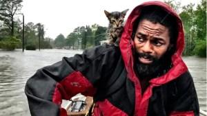 """""""Sobreviviente"""", el gatito rescatado en medio del huracán Florence"""