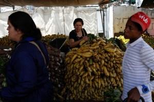 Comprueban contaminación de hongo Fusarium en plátanos cerca de la frontera colombo-venezolana