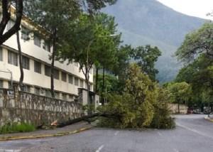 Autoridades en Chacao retiran árbol caído por fuertes lluvias en Altamira #20Oct