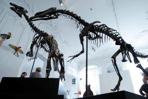 Se subastan dos esqueletos de dinosaurios enemigos en París (Fotos)