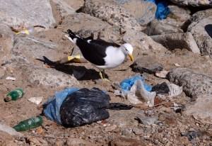 El plástico de los océanos: La amenaza llega ya a nuestra mesa (fotos)