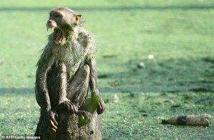 Mono mata a recién nacido tras arrebatárselo a su madre en su casa