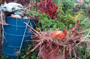 Vecinos del sector Coa en Yaracuy exigen restablecer el servicio de recolección de basura