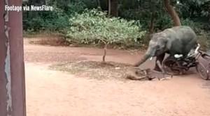 Un elefante salvaje ataca y causa pánico en una zona residencial (Video)