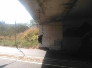 ¡Peligro! Una cabilla cuelga en el túnel de La Victoria (FOTOS)