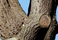 ¿Ves al búho en el árbol? Esta foto viral tiene a internet de cabeza