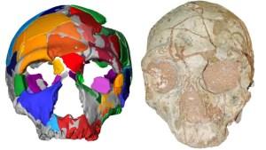 Identificado en Grecia el Homo sapiens no africano más antiguo