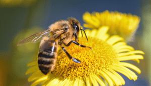 ¿Sabías que sin abejas no hay vida? Conoce aquí las razones