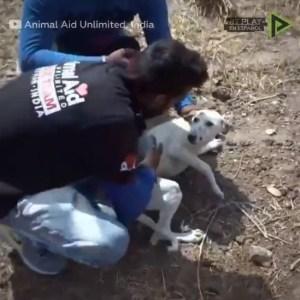 ¡Te robarán el corazón! Estos son los rescates de animales más conmovedores en Internet