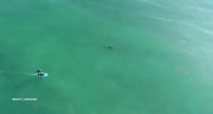 ¡ESCALOFRIANTE! Graban con un DRON a un grupo de tiburones blancos acechando a surfistas (Video)