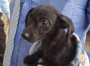 Capturados tres adolescentes que torturaron a cachorro dentro de una lavadora en Carabobo