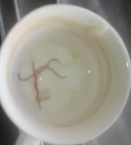 ¡ASCO! Hidrocapital le envía agua con LOMBRICES a los caraqueños (VIDEO)