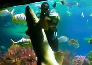 VIRAL: Este buzo no tuvo miedo de entrar al acuario para bailar… ¡con un tiburón! (VIDEO)