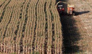 Brasil encaminada a registrar cosecha récord en granos y oleaginosas