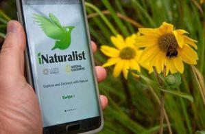 iNaturalist, la aplicación perfecta para identificar los organismos ambientales