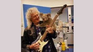 Brian May le dedicó un concierto privado a koala salvado de los incendios en Australia (Fotos y video)