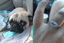 ¡NOO, Firulais! Su novio le propuso matrimonio pero su perro se comió el anillo (FOTOS + Rayos X)