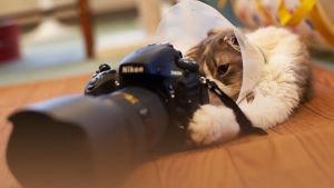 Nikon abrió un espacio de clases online gratuitas de fotografía para colaborar durante la pandemia