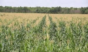 Producción agropecuaria en Machiques casi paralizada por escasez de combustible