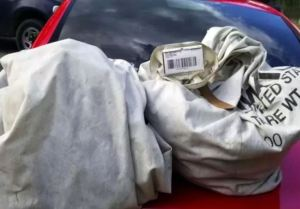 Salieron de paseo tras la cuarentena y hallaron un millón de dólares en bolsas de basura
