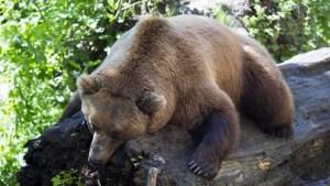 Un niño mostró qué hacer cuando lo perseguía un oso en un valle de Italia (Video)