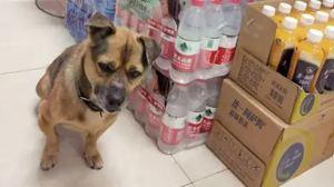 ¡Awww! El conmovedor perrito que esperó más de tres meses a su dueño en un hospital de Wuhan