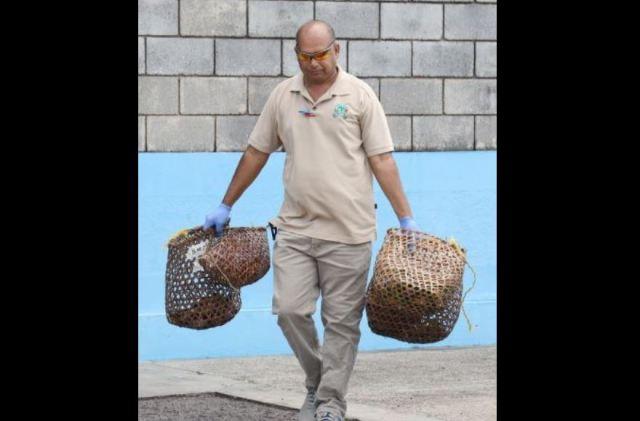 Contrabandistas arrojaron al mar Caribe 47 aves exóticas de Venezuela (fotos) 3