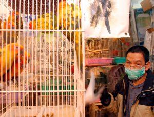 China quiere eliminar el sacrificio de aves vivas en los mercados tras el coronavirus